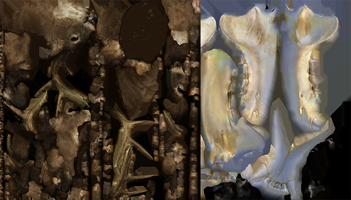 3-d scans.. texture maps skulls, Alan Powell, Christine Kemp