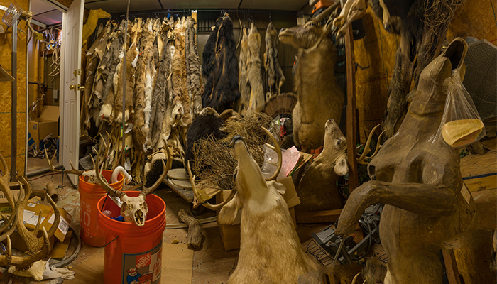 """Fur , pelt Storage with upset animals""   taxidermy shop, photo by Alan Powell 2018"