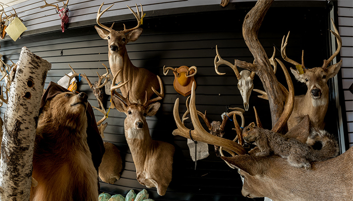 """Flying Squirrel with Deer herd and Bear"" Taxidermy Shop, PA, photo by Alan Powell"
