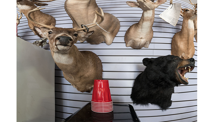 """Deer, Bear, and red Cups"" - Taxidermy Shop, PA, photo by Alan Powell 2017"